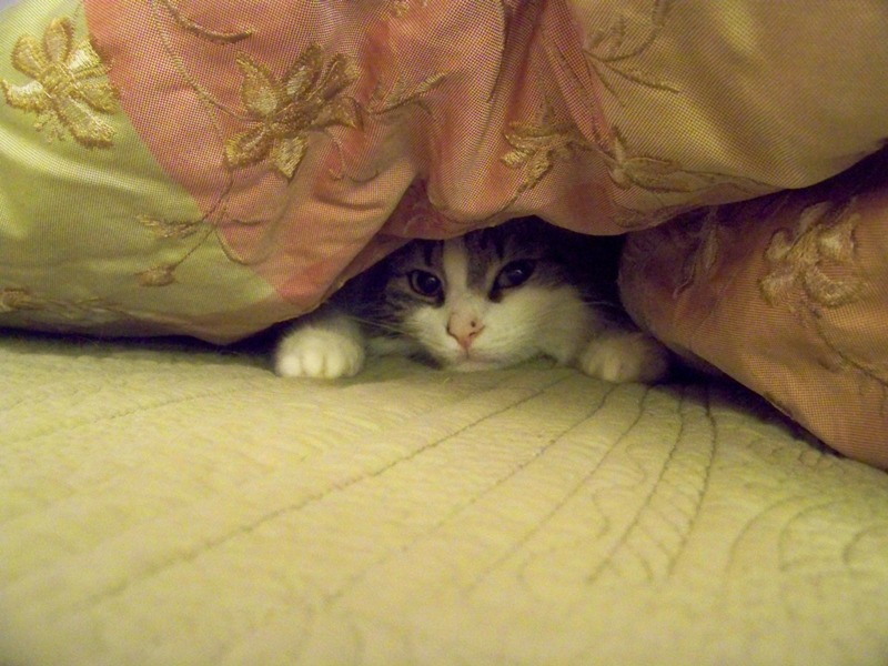 sabrina_comforter