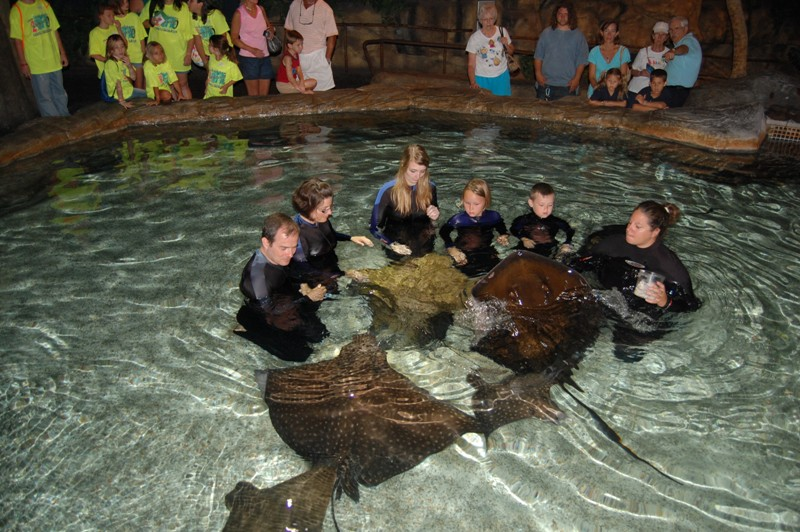 swimming well kneeling with stingrays skulls in the