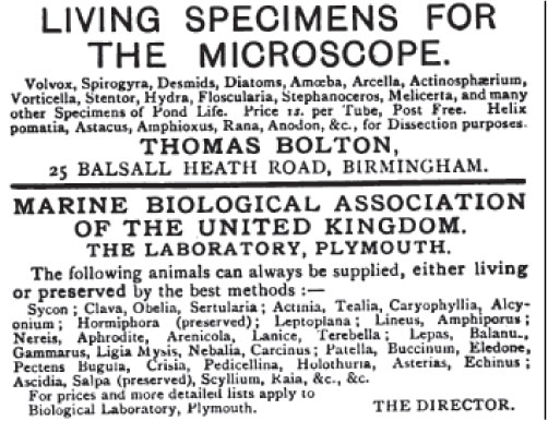 1903 scientific ad