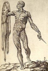 Anatomia del corpo humano by Juan Valverde de Amusco (1559), via Wikipedia.