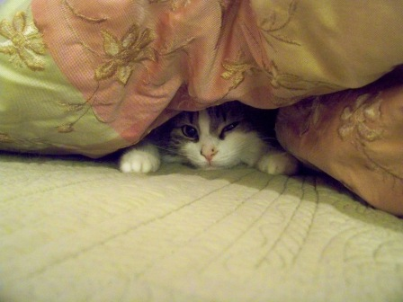 Here Sabrina demonstrates her masterful cloaking skills.
