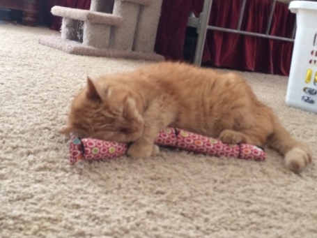 Goldie enjoys a catnip tail, July 2014.