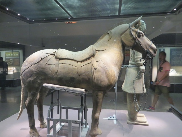 Side view of the cavalry horse.
